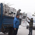 काठमाडौंको टुँडिखेल वरिपरिका १ सय २५ वटा 'ट्रि गार्ड' हटाइए
